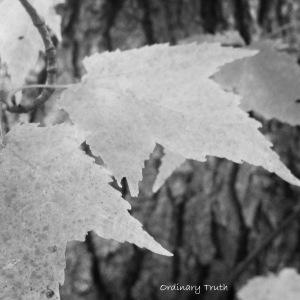 B and W Leaf